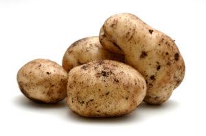 Sebago Potato 370511.jpg
